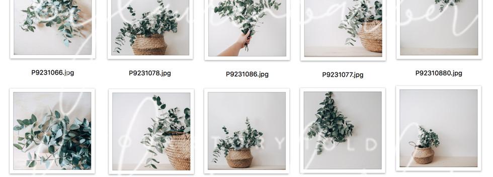 Eucalyptus-Collection.jpg