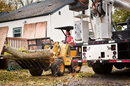 tree services.jpg