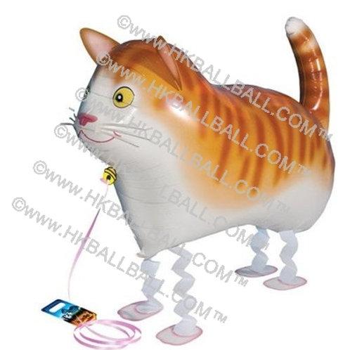貓咪 Cat