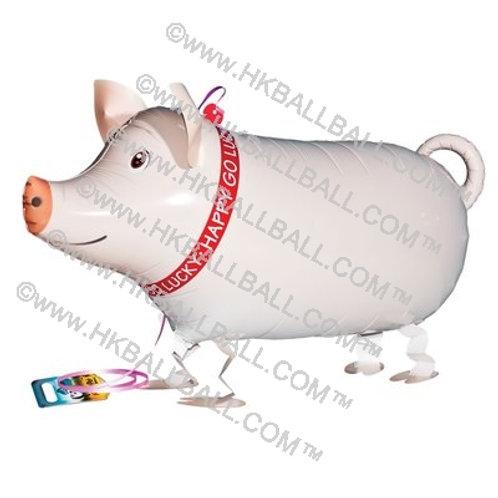 小白豬 Pig