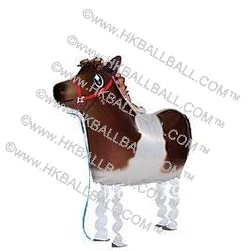 小馬 Horse