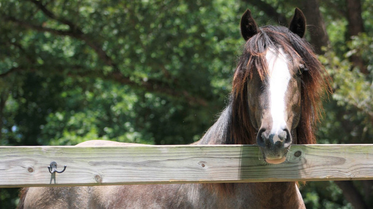 Yearling Blue 13mos