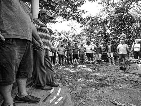 Conheça a Rede Agroflorestal do Vale do Paraíba e sobre sistemas agroflorestais