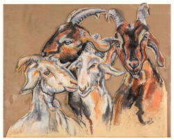 Goats in the Negev