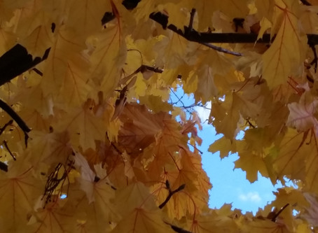 Autumn and Mindfulness