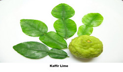 Keffir Lime
