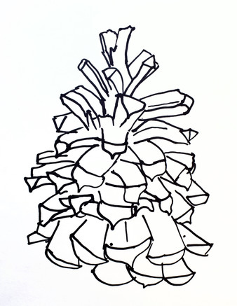 """"""" Pinecone"""" by Jackson"""