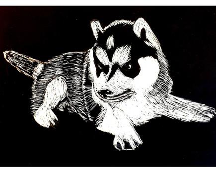 """Husky"" by Alma"
