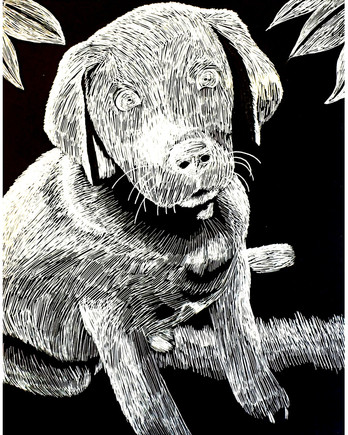 """""""Silver Labrador"""" by Katie"""
