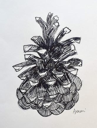 """Pinecone"" by Ayami"