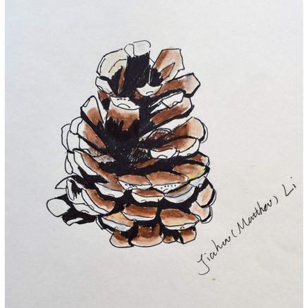 """Pinecone"" by Matthew"