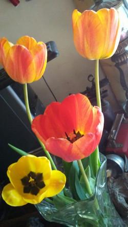 Just a few drops for cut flowers
