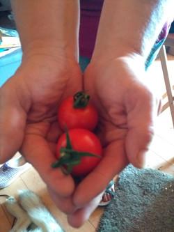 Giant cherry tomatoes
