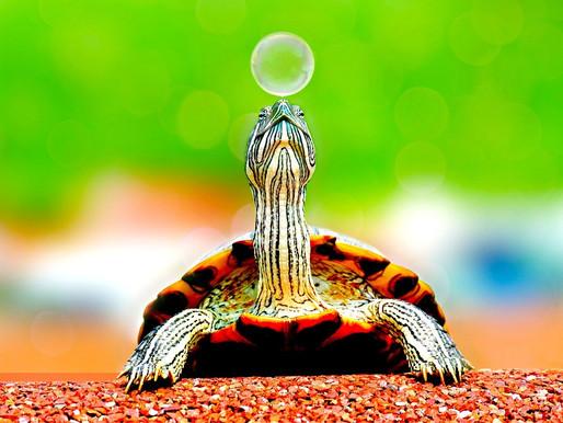 Make your garden more vivid with a Solar Turtle!