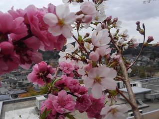 春のお便りPART1