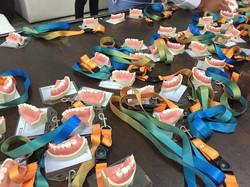 Lots of Teeth!