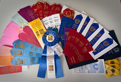 Some of photo-contests ribbons