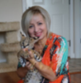 African Serval. Buy Savannah Online. About Savannahs cat.