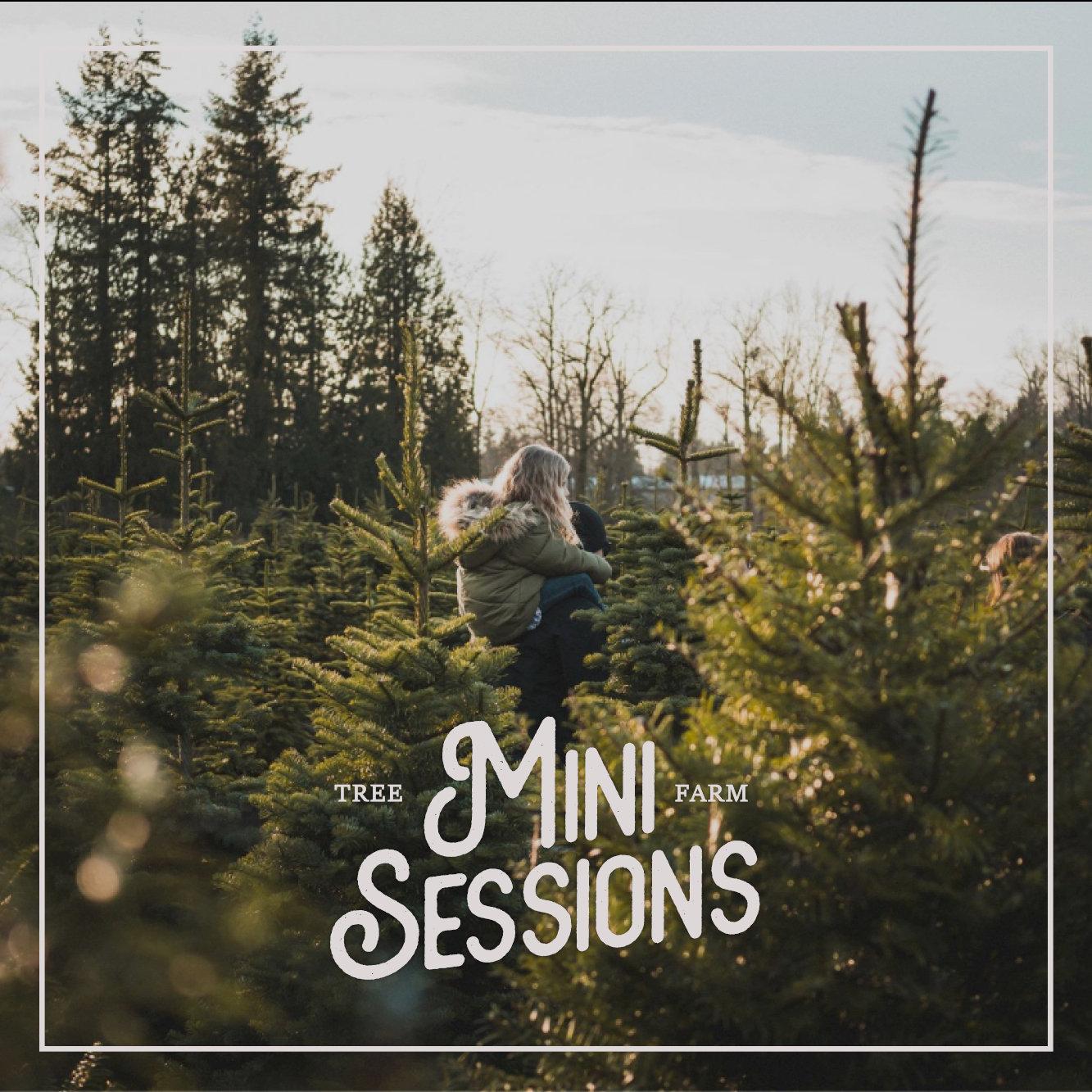 Tree Farm Mini Session