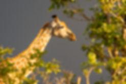Semowi-animals-0031.jpg