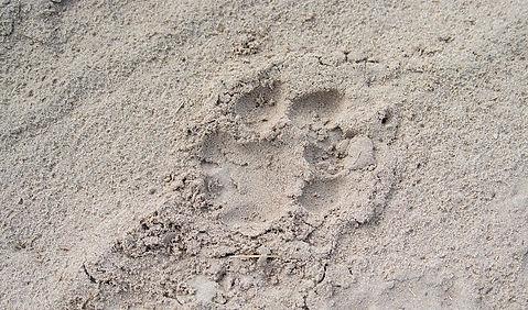 Semowi-animals-0057.jpg