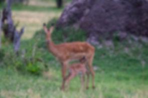 Semowi-animals-0048.jpg