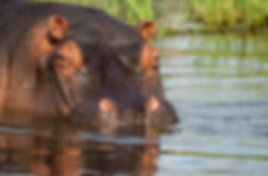 Semowi-animals-0074.jpg