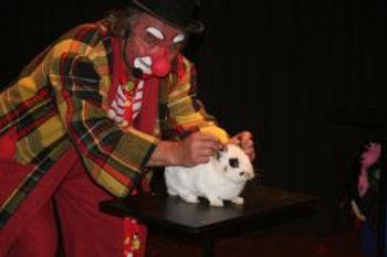 magicien-clown-lapin-nain0.jpg