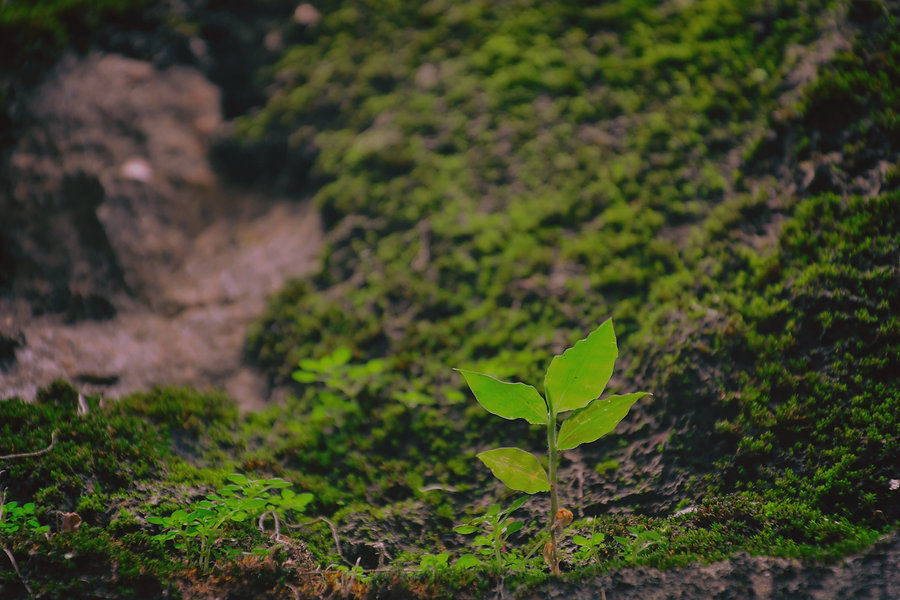 green leafed plant on grassfield_edited.jpg