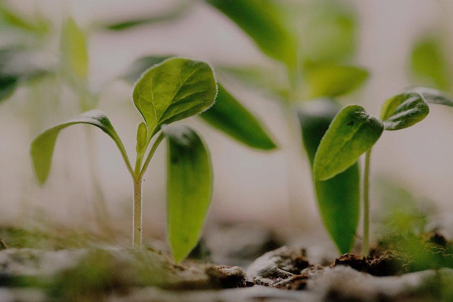 green plants on soil_edited_edited.jpg