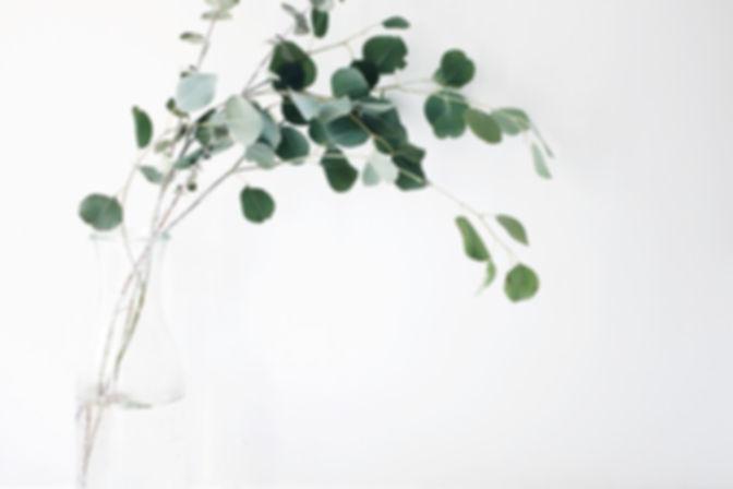 HR- plant healing.jpg