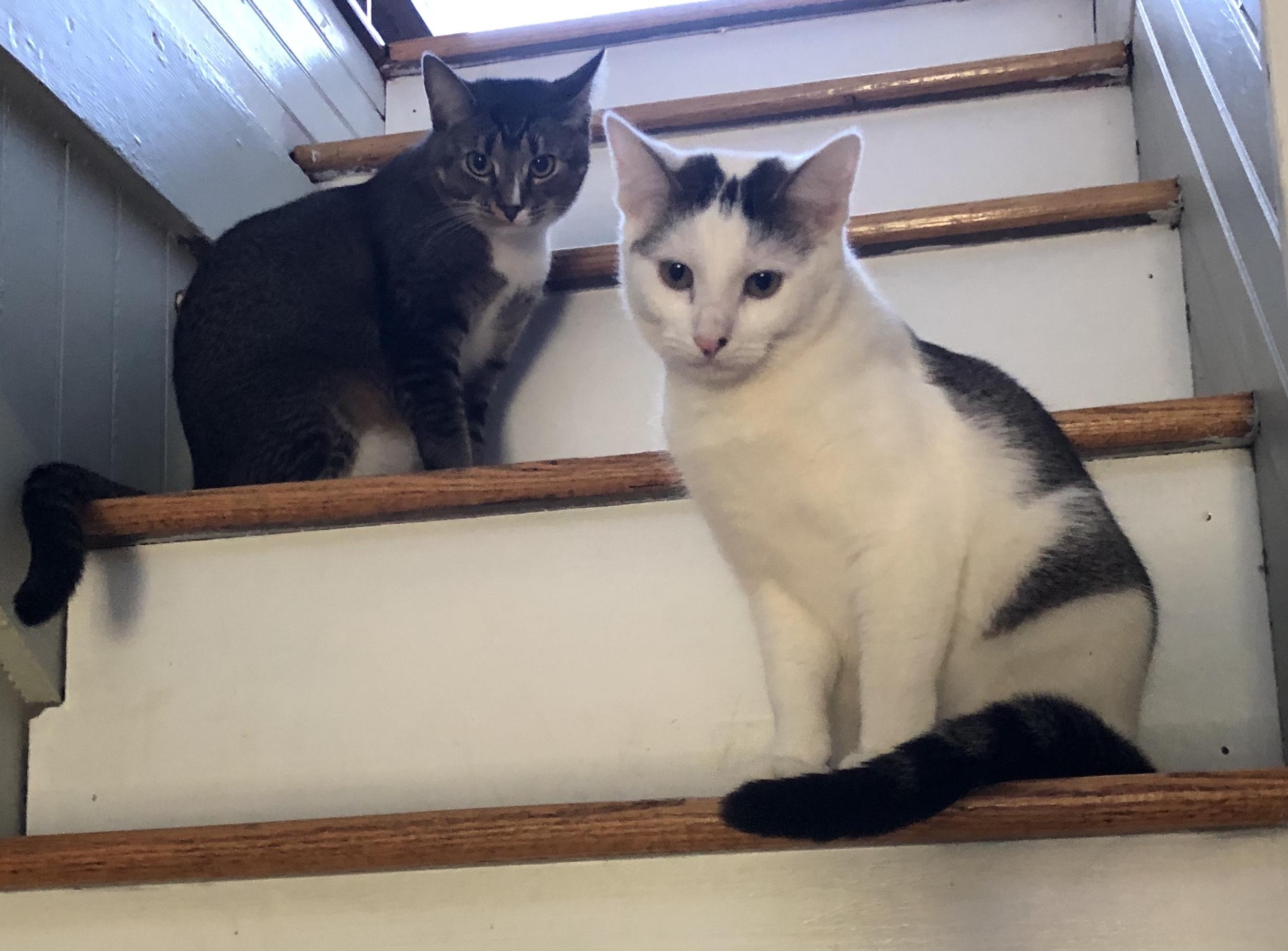 Tabitha & Colleen