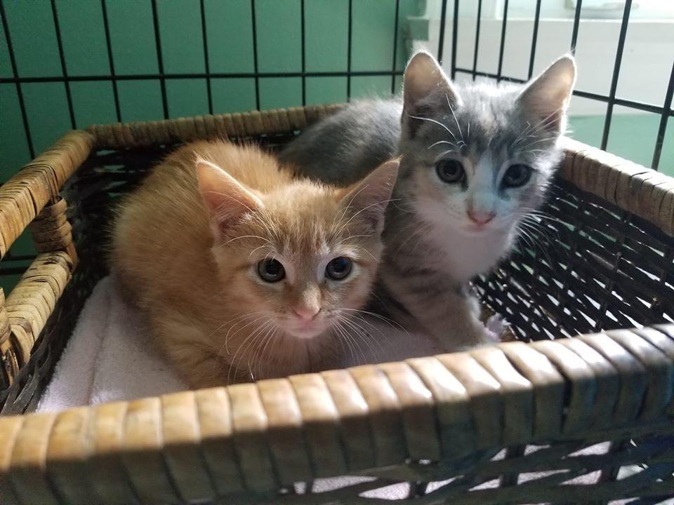 Livvy & Lizzy