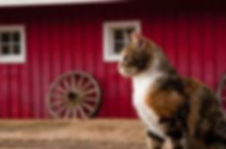 barn cats.jpeg