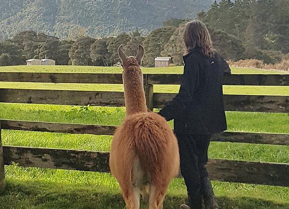 Llama Treks - Adult
