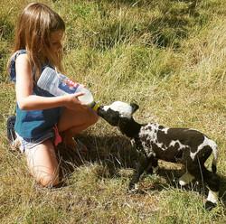 Bottle feeding the little lambs.
