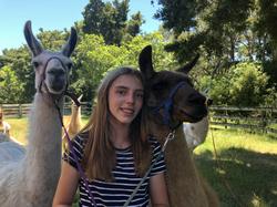 Walking the llamas