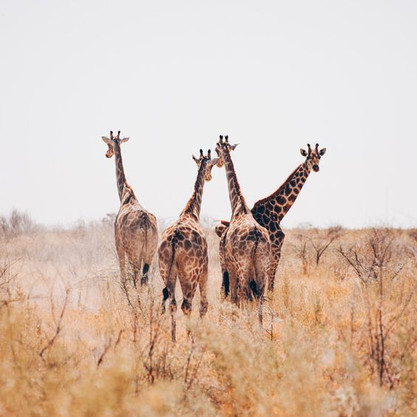 Voyage sur mesure Tanzanie Safari Serengeti Cratère N'Gorongoro