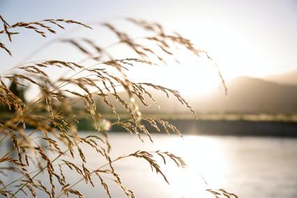 close-up-photo-of-wheat-2463936.jpg