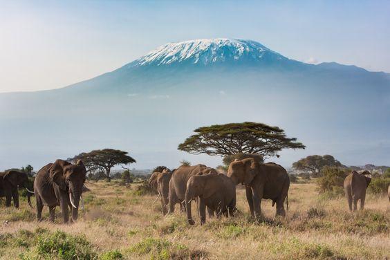 Voyage sur mesure Tanzanie Safari Serengeti Elephants Kilimajaro