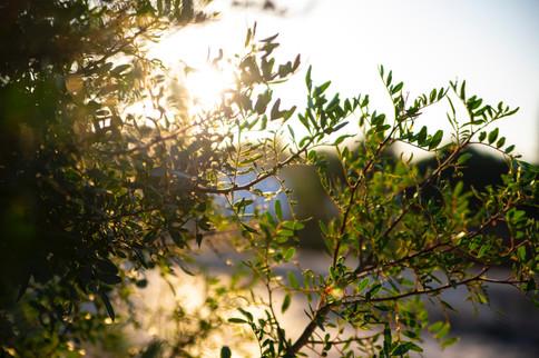 Voyage sur mesure Ibiza Baléares weekend séjour