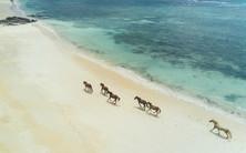 TurtleIsland-horses-running-on-beach.jpg