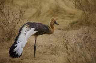Voyage sur mesure Tanzanie Safari Tarangire Savane Oiseaux