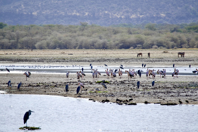 Voyage sur mesure Tanzanie Safari Tarangire lac Manyara