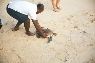 Turtle-Conservation_1500.jpg