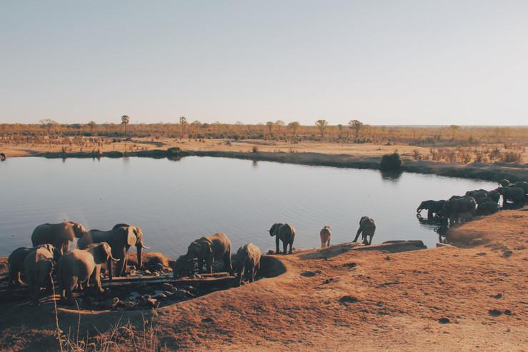 Voyage sur mesure Tanzanie Safari Tarangire Savane Lac Manyara Elephants