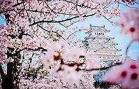 sakura-vesna-yaponiya-zamok.jpg