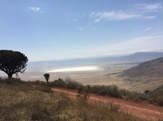 Voyage sur mesure Tanzanie Safari Tarangire Savane paysage