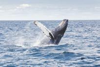 Afrique du Sud voyage sur mesure Le Cap baleine