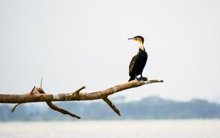 Voyage sur mesure Tanzanie Safari Tarangire Savane Oiseaux sauvages